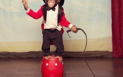 Schluss mit dem Affentheater!